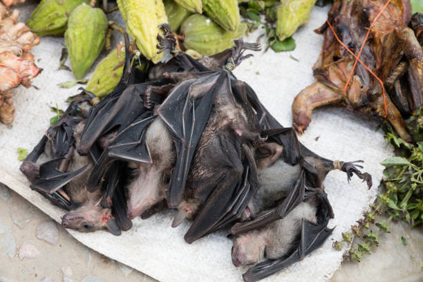 Image result for bat meat