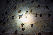 istock Bats colony in natural cave 1214746183