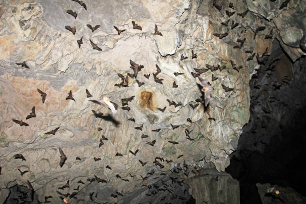 Bats flying in Lanquin Cave, Guatemala stock photo