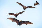istock Bats flying on blue sky 954046310
