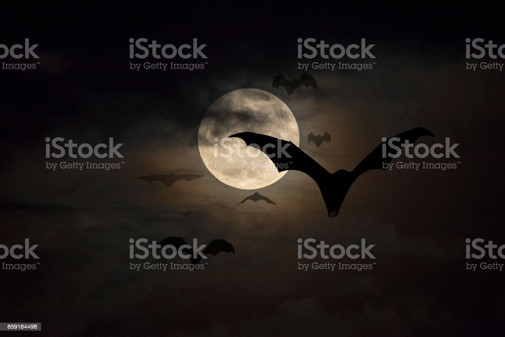 Bats flying stock photo