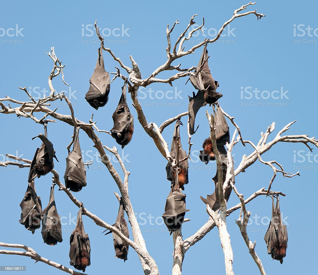 Bats Hanging Out Together stock photo