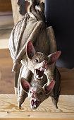 istock Bats hanging wall 1060252118