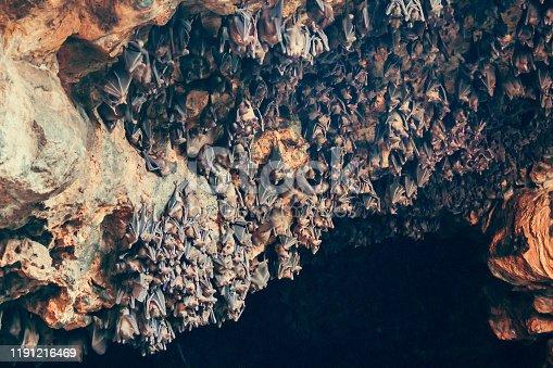 Bats in a cave, in Bali, Indonesia