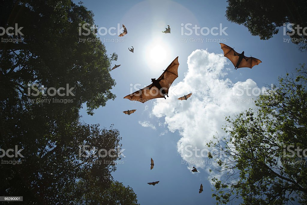Bats in flight stock photo