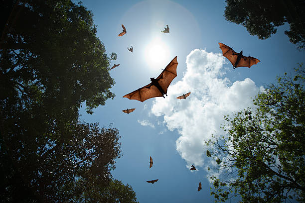 Bats in flight stock photo