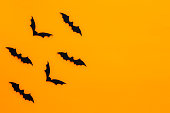 istock Bats with an orange background. Halloween concept. 1041488024