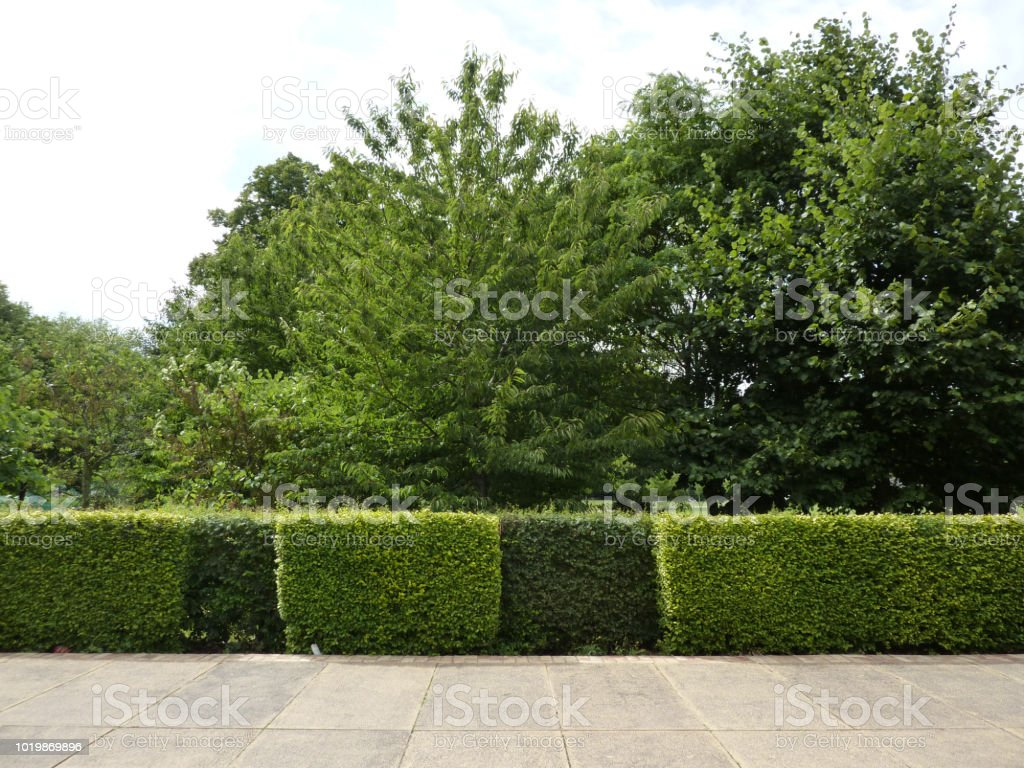 Hedges in Battersea park