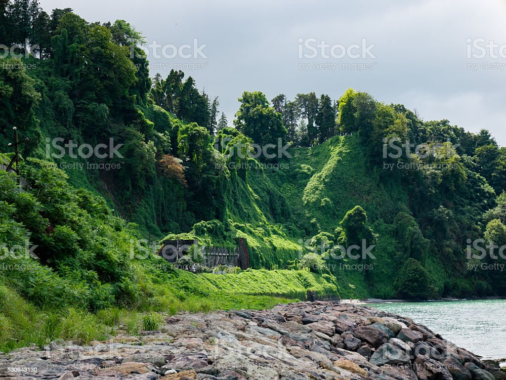 Batumi botanical garden stock photo
