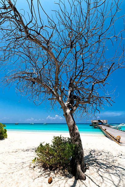 Baum am Strand stock photo