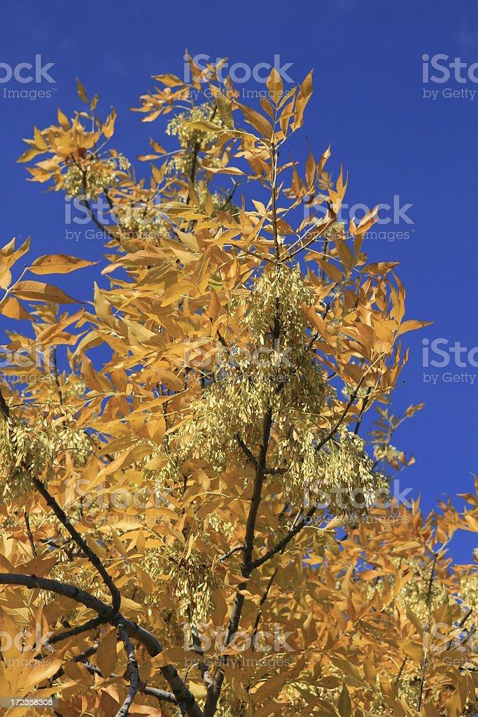 baum im herbst royalty-free stock photo