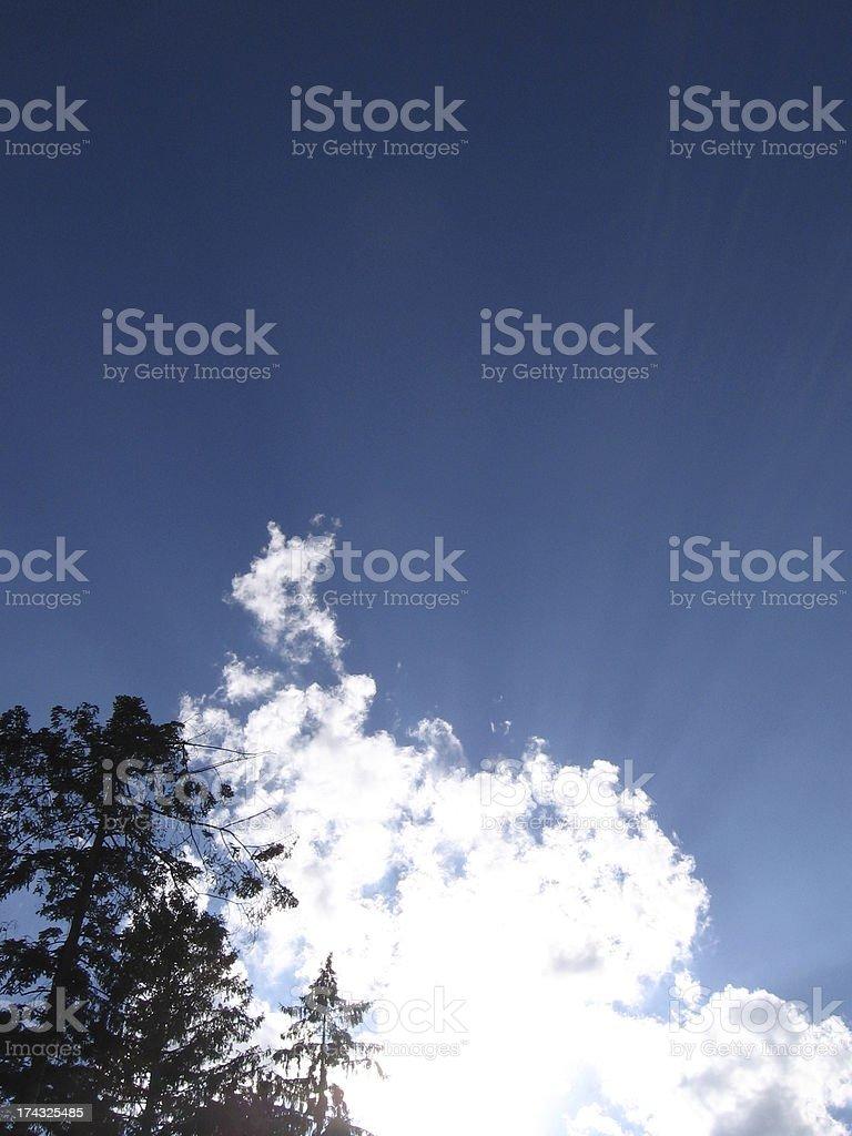 Baum stock photo