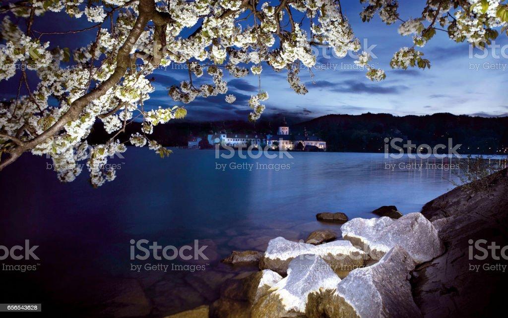 Baumblüte stock photo