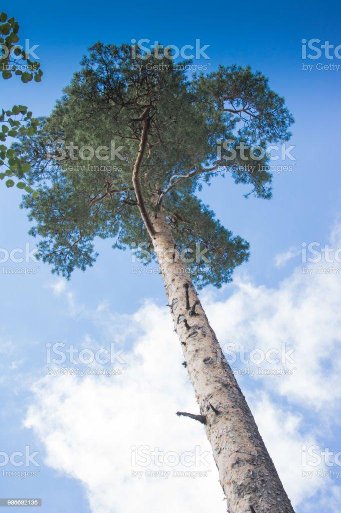 Baumkrone einer Fichte stock photo
