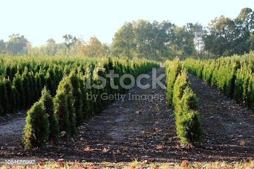 Pflanzen in in einer Reihe