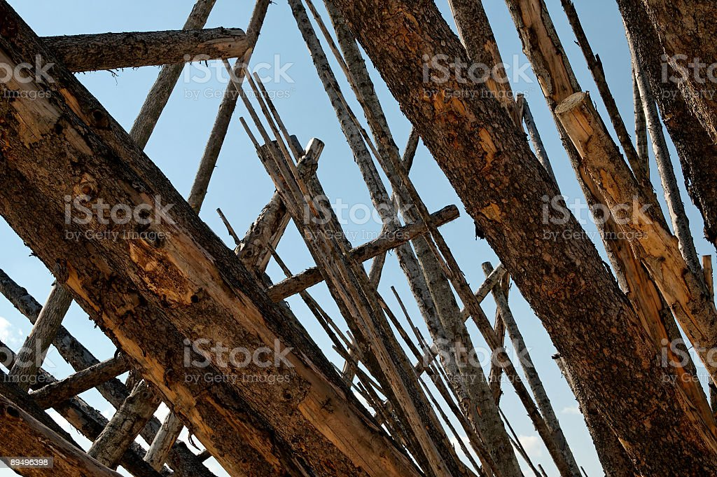 Baumstaemme2 royalty free stockfoto