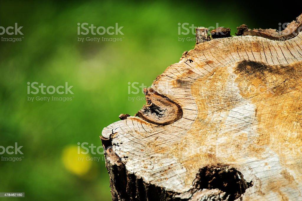Baumstamm, Baumstumpf von oben stock photo
