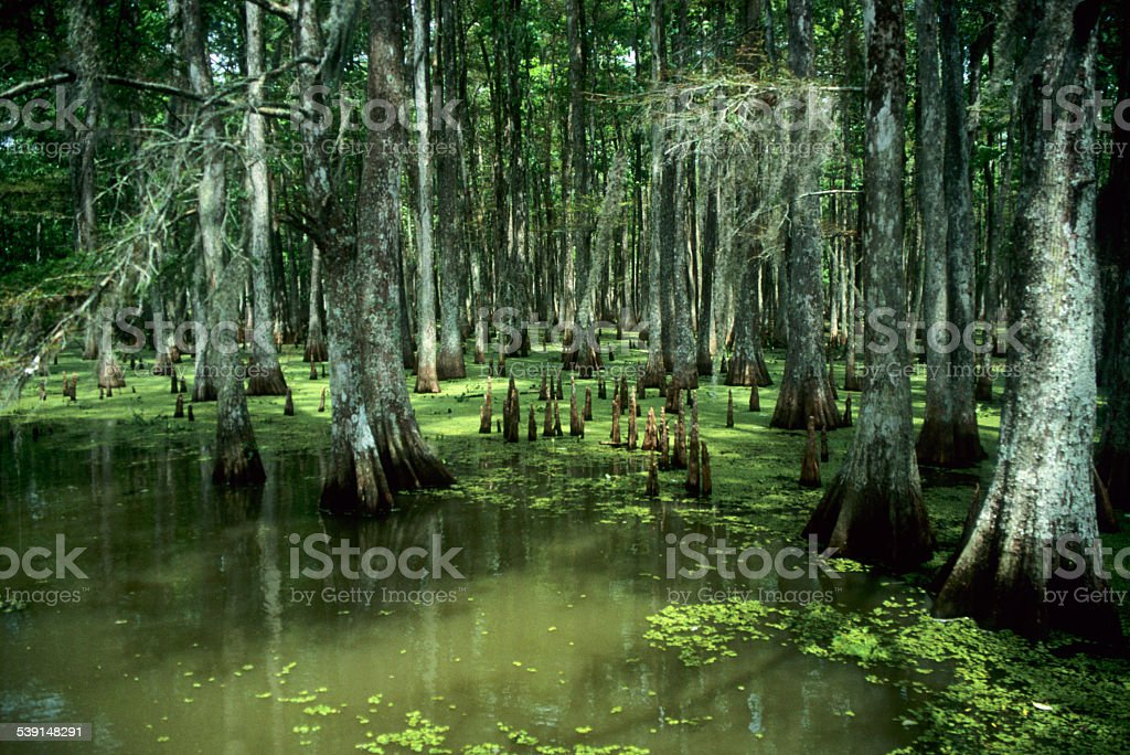 Bauou with Cypress trees. stock photo