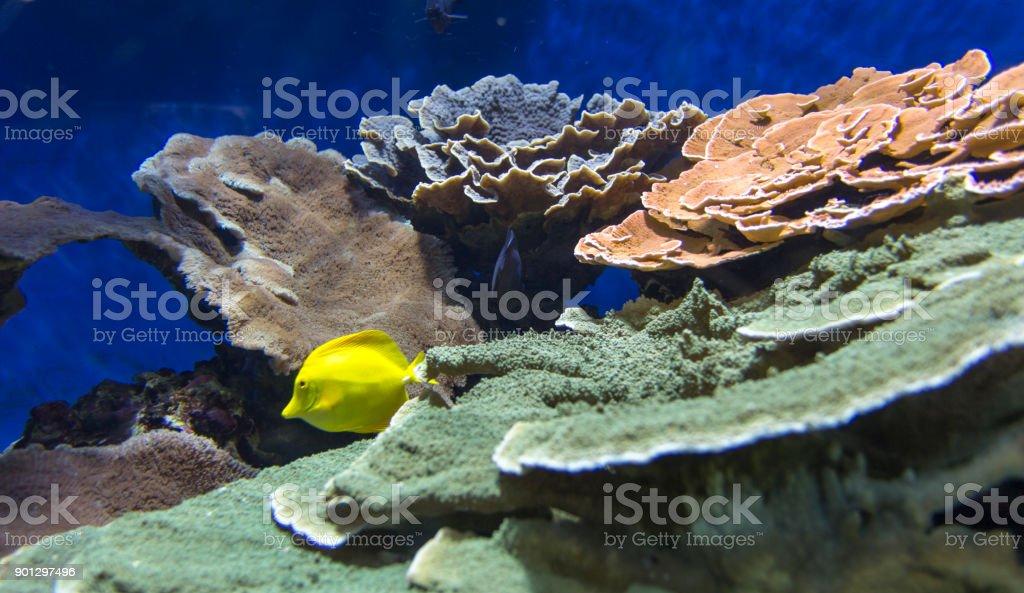 Bautiful coral reef view stock photo