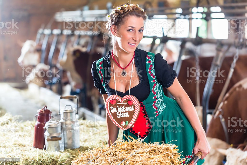 Bavaria woman driving pushcart in cow barn stock photo