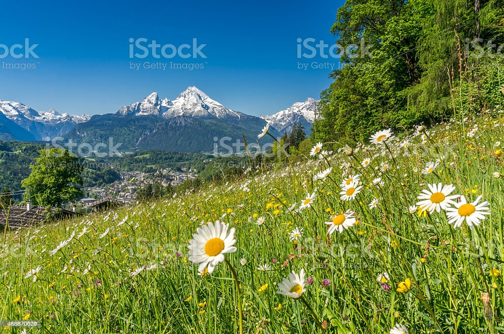 Bavarian Alps with beautiful flowers and Watzmann in springtime, Germany stock photo