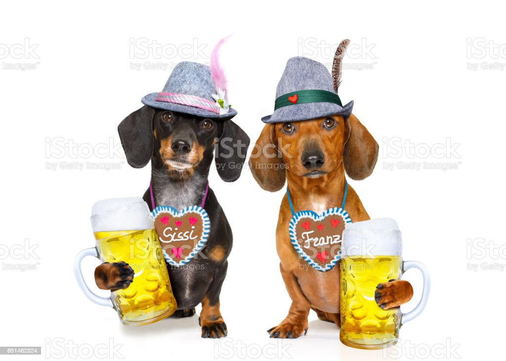 bavarian beer dachshund sausage dogs ,  couple of two stock photo