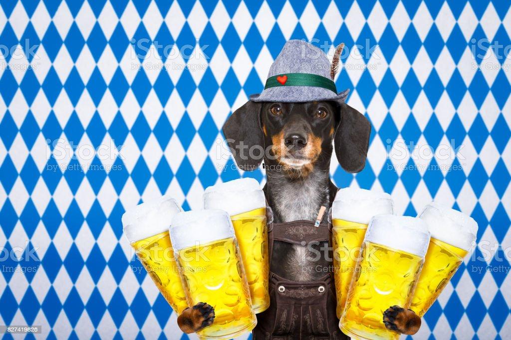 Bayerisches Bier Hund – Foto