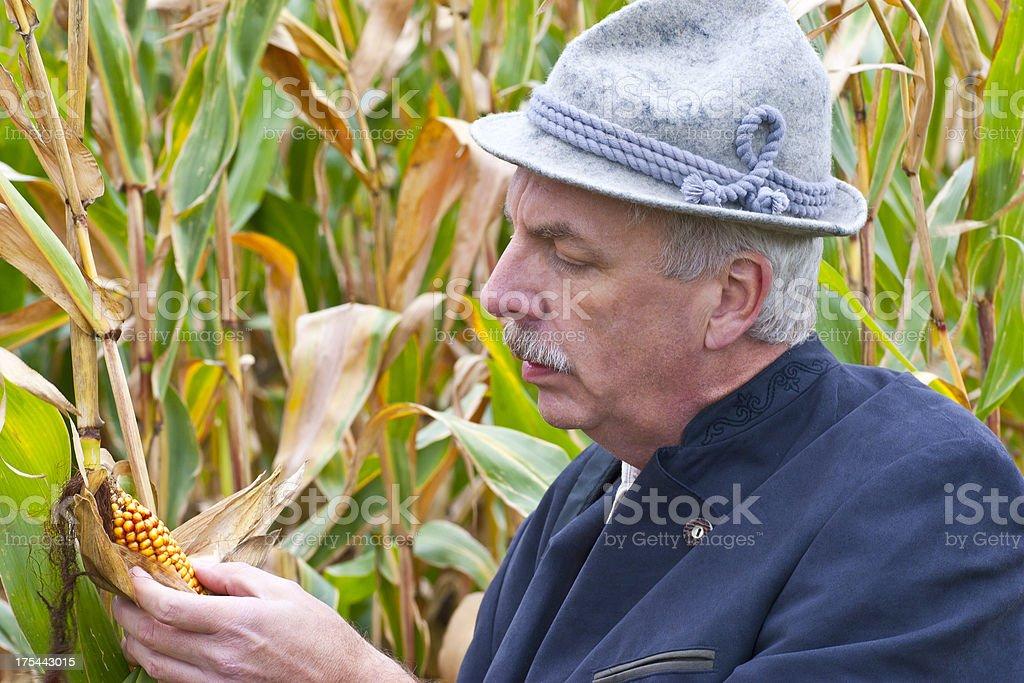 Bavarian Farmer Inspecting Maize royalty-free stock photo