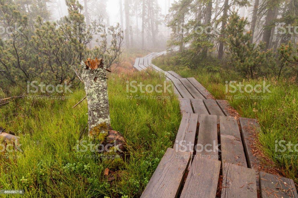 Bayerischer Wald und die hölzerne Gehsteige oberhalb der Torf. Herbstlichen Wald im Nationalpark Bayerischer Wald, Deutschland. – Foto