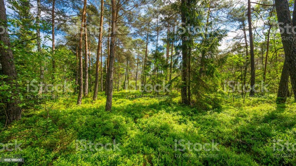 春のババリア地方の森林 - ドイツのロイヤリティフリーストックフォト