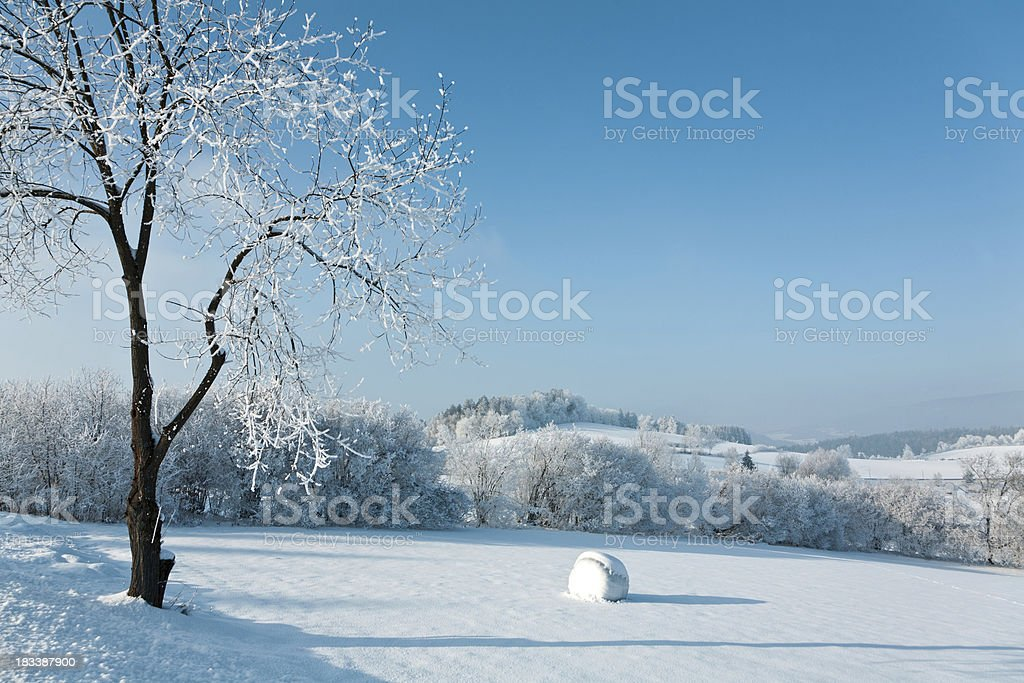 Bavarian forest in winter stock photo