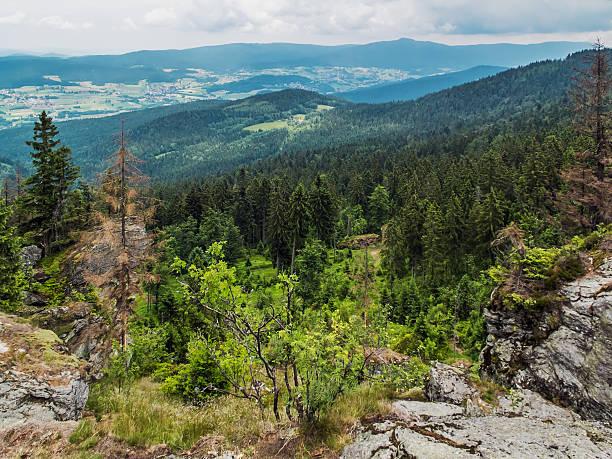 bavarian forest - bayerischer wald bildbanksfoton och bilder