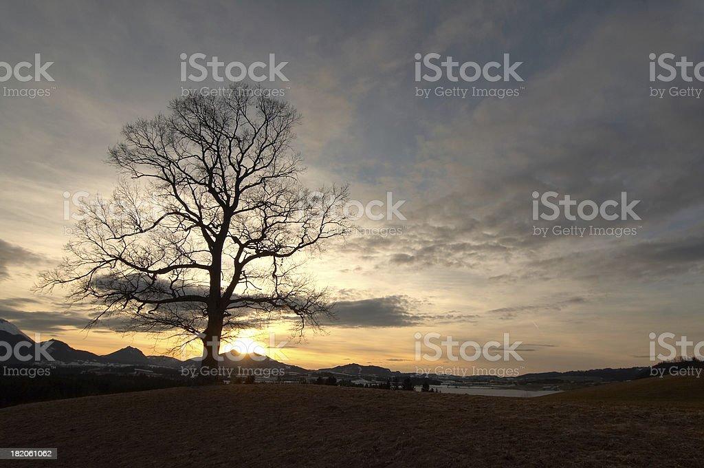 bavarian oak royalty-free stock photo