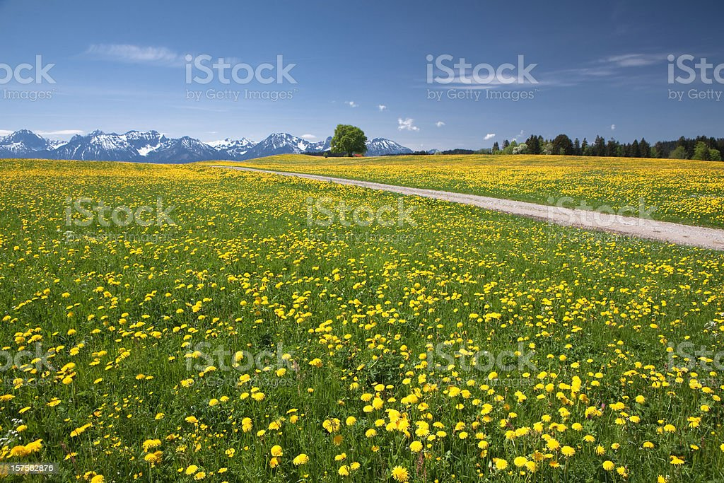 bavarian spring meadow royalty-free stock photo