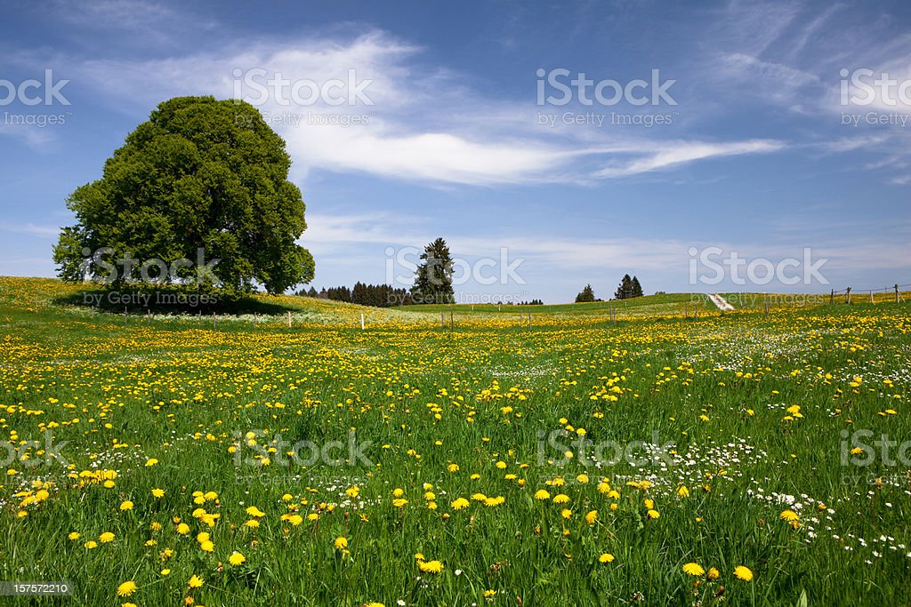 Bayerische Frühling meadow – Foto