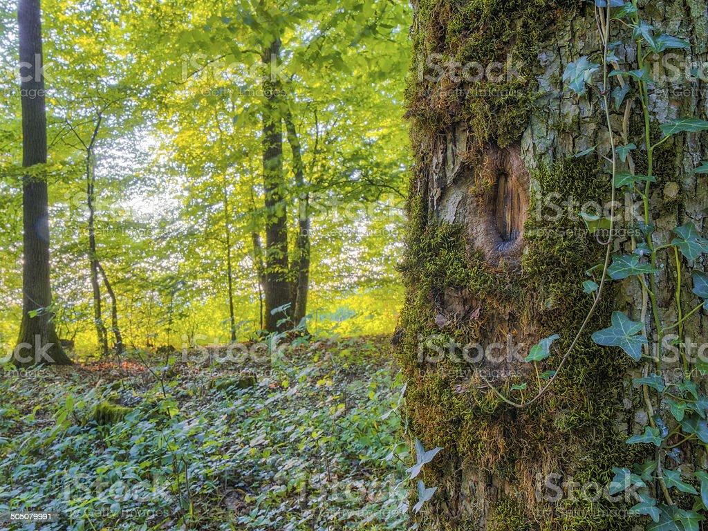 Bavarian Summer Forrest stock photo