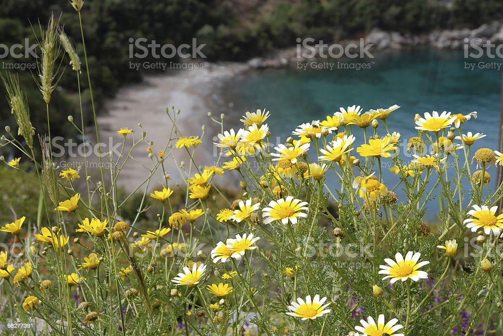 bay and flowers royalty-free stock photo