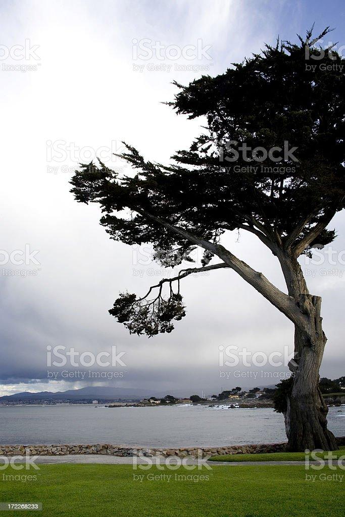 Bay At Monterey royalty-free stock photo