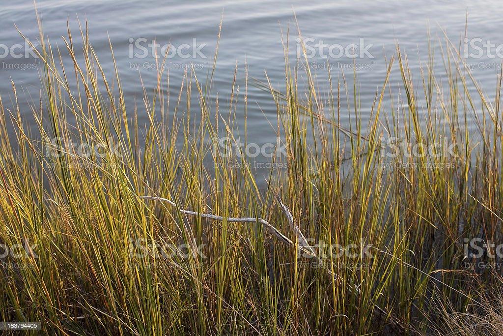 Bay Grass Coastal Background royalty-free stock photo