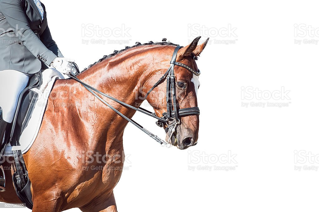 Bay horse: dressage - with clipping path stock photo