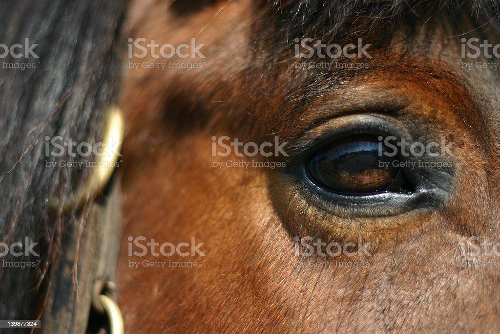 Bay horse eye royalty-free stock photo