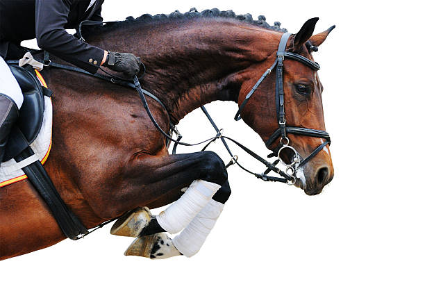 Bay horse show, isoliert in springen – Foto