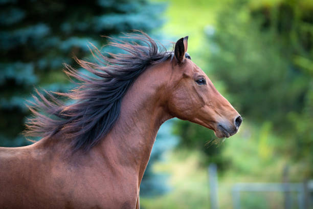 bay horse portrait on green background - horse stock pictures, royalty-free photos & images