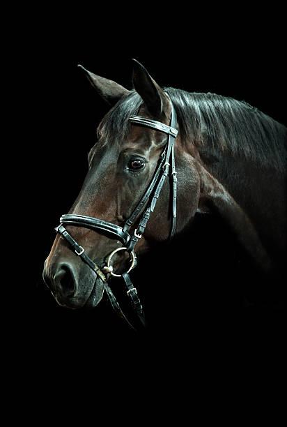 Bay horse portrait picture id108350697?b=1&k=6&m=108350697&s=612x612&w=0&h=wdj8obnw6rg1t05kqfkn9yyqktku9ewibq1ovx0e4ao=