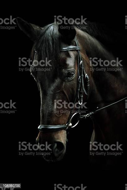 Bay horse portrait picture id108350700?b=1&k=6&m=108350700&s=612x612&h=nrjqv aaw yylypotlongoefxvfuin7 d4rz4h1lvsk=