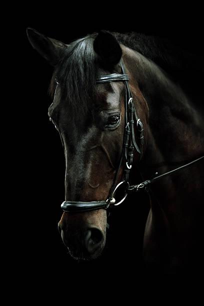 Zatoka konia Portret – zdjęcie
