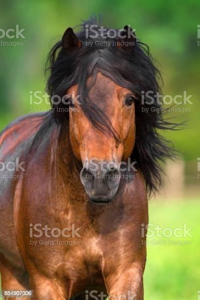 Bay horse portrait picture id854907306?b=1&k=6&m=854907306&s=612x612&h=todqtem9maia9eautwgezslyn1mol9xffd3iabhq nm=