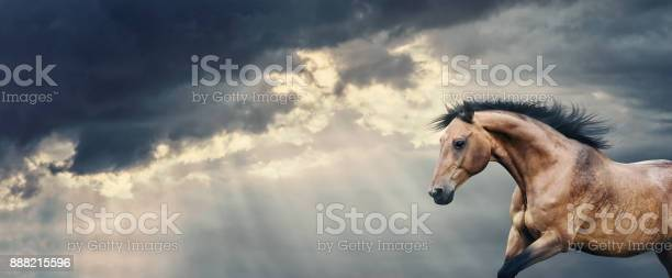 Bay horse running at beautiful dark storm cloudy sky with rays banner picture id888215596?b=1&k=6&m=888215596&s=612x612&h=d4msxz0ic nf7imoxb8d5jw8vpckibdj2onekaqtvuo=