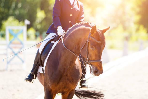 Bucht Pferd mit Reiter in Dressurprüfungen – Foto