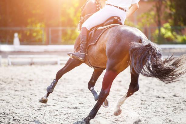 bay häst med ryttare på hoppning konkurrens. - hästhoppning bildbanksfoton och bilder